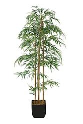 Bamboo Tree 6' , 91725