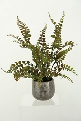 "Fern In Ceramic Planter- ""18H, 91386"