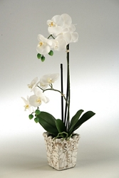 "Classic Orchids- ""23H, 91394"