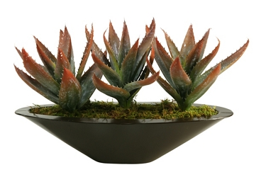 """Aloe Plants- 12.5""""H, 92372"""