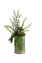 "Aloe Burro Tail & Succulents- 19""H, 92374"