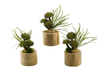 "Mini Wheel Succulents- 10""H, 92376"