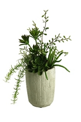 "Mini Dracaena Heads- 12""H, 92377"