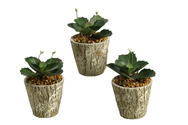 "Wild Succulents- 6.5""H, 92382"