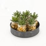 D&W Silks - Faux Plants