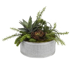 "Echeveria Aloe & Succulents- 16""H, 92355"