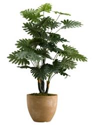 "Selloum Philo Plant- 36"" , 92367"
