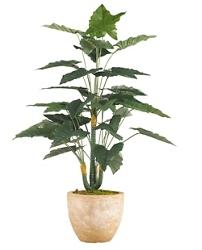 """Philo Plant- 36""""H, 92369"""