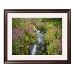 "33""W x 27""H Pink Monkey Flowers Print, 85716"