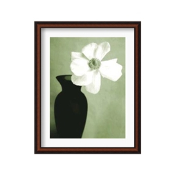 Single Anemone by Steven Meyers- Framed Photography Print, 87616