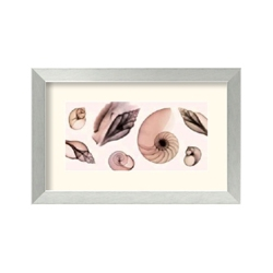 Shell Collection by Steven Meyers- Framed Art Print, 87655