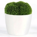 "Small Mood Moss - 6.5""H, 93003"