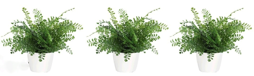 "Set of 3 small ferns - 12""H, 93005"