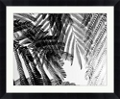 "Fernbrush Palm Framed Photography - 34""W x 28""H, 92614"