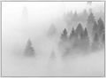 "Forest Mist Framed Canvas Photography Print - 60""W x 44""H, 92622"