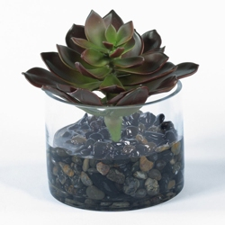 "Burgundy Succulent in Glass Container - 7""H, 82347"