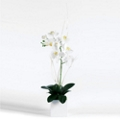 "White Orchid in Cube - 32""H, 82351"