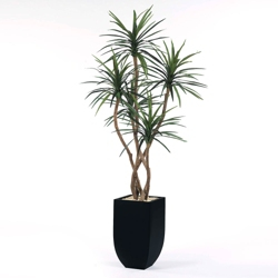 Yucca Tree in Metal Container - 8'H, 82358