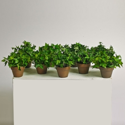 Potted Ivy - 6 Inches Tall - Set of 9