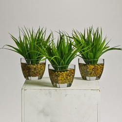 Grass Plants in Glass Pots with Faux Water