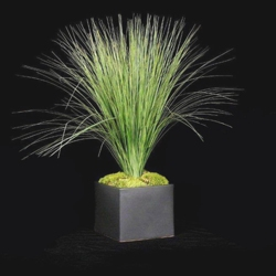 "Tall Grass in Black Cube - 29""H, 87705"