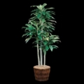 Cordyline Tree in Basket - 7 Ft., 87708