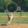 Large Hoop Jump Dog Park Trainer, 82310