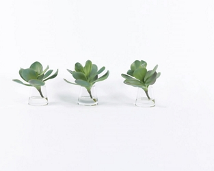 "Set of 3 Succulents in Water - 10""H, 93001"