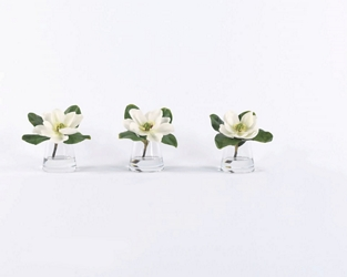 "Set of 3 Magnolia Plants in Water- 8""H, 93007"