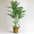 7 Foot Tall Indoor Areca Palm Tree, 87365