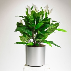 Realistic White Peace Lily Plant - 3 Ft., 87374