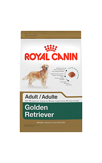 golden retriever puppy dry dog food royal canin breed health nutrition. Black Bedroom Furniture Sets. Home Design Ideas