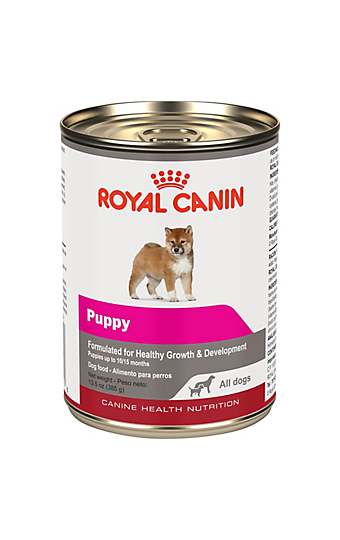 labrador retriever puppy dry dog food royal canin breed. Black Bedroom Furniture Sets. Home Design Ideas