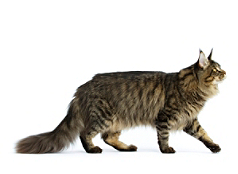 Tailor-made Nutrition for Pure Breed Cats. An exclusive kibble for ...