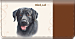 Black Lab Checkbook Cover
