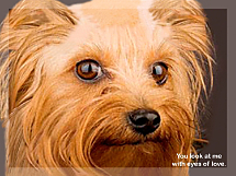 Faithful Friends - Yorkie Notecards