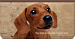 Faithful Friends - Dachshund Checkbook Cover