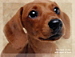 Faithful Friends - Dachshund Note Cards