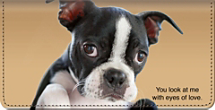 Faithful Friends - Boston Terrier Checkbook Cover