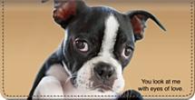 Faithful Friends - Boston Terrier Checkbook Cover