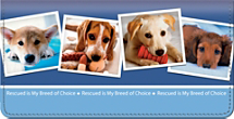 Rescued is My Breed of Choice Checkbook Cover