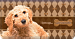 Labradoodle Checkbook Cover