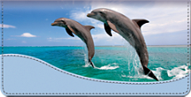 Dancing Dolphins Checkbook Cover