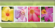 Exotic Flowers Checkbook Cover