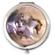 Equus Compact