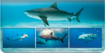 Sharks Checkbook Cover