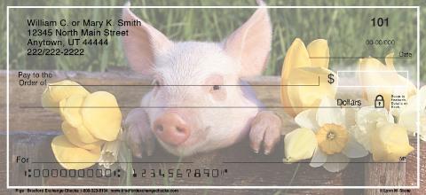 Pigs Personal Checks