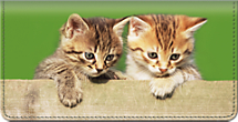 Cuddly Kittens Checkbook Cover