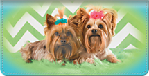 The More Yorkies, the Merrier! Double Pups Make for One Super Cute Checkbook Cover