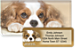 Faithful Friends - Cavalier King Charles Bonus Buy